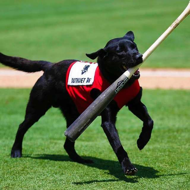 Ump Acts Out Rudely Toward The Bat Dog, And The Crowd Lets Him Hear It