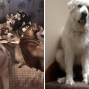 20 Photos That Show How Life Is With More Than One Pet