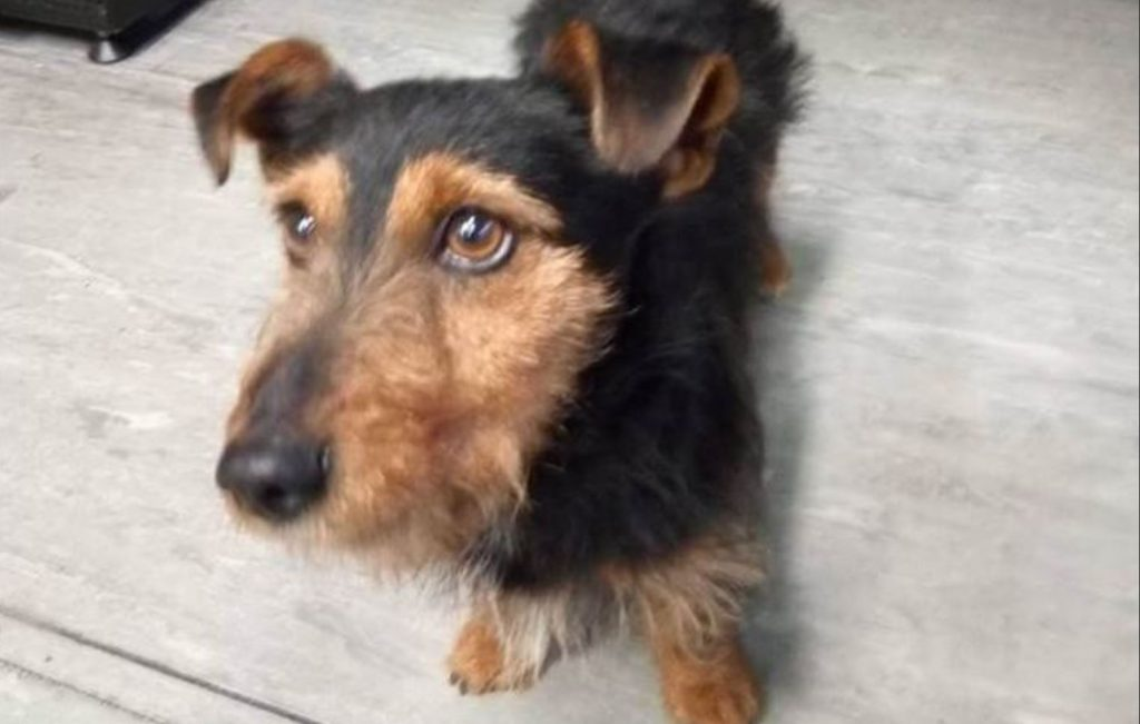 Lost dog boards train heading to Dublin: Who is he?