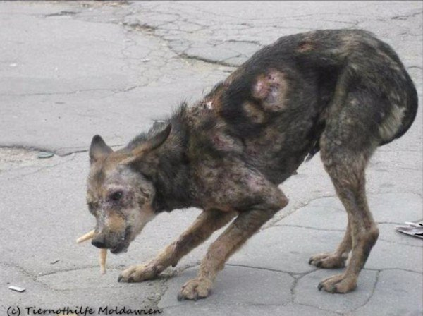 Couple See Photo of 'Zombie' Dog And Rescue Her When Nobody Else Would