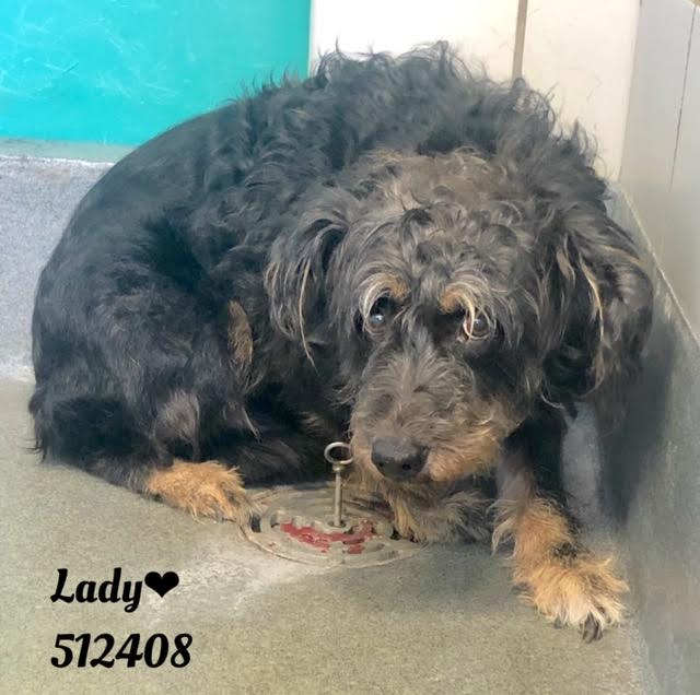 Scared, old dog on list to be put down at busy animal control agency