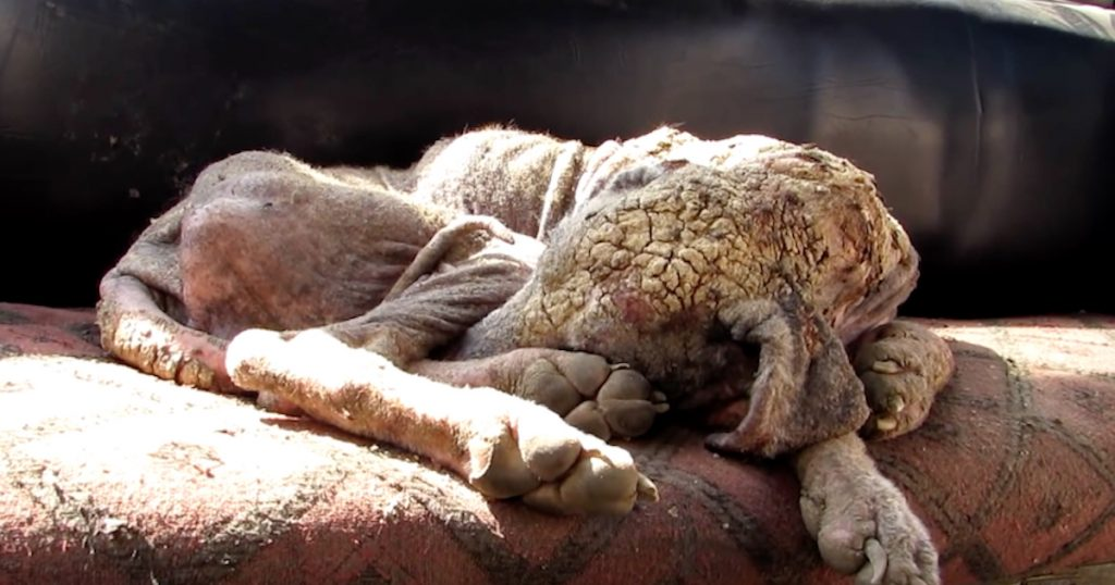Street Dog Was Neglected For So Long She Was Starting To Turn To Stone
