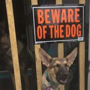 19 Very Vicious Dogs Labeled With 'Beware' Signs For Your Own Good