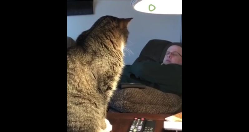 Rude cat humorously wakes up owner