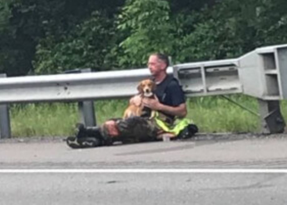 Firefighter comforts dog after deadly Kentucky crash