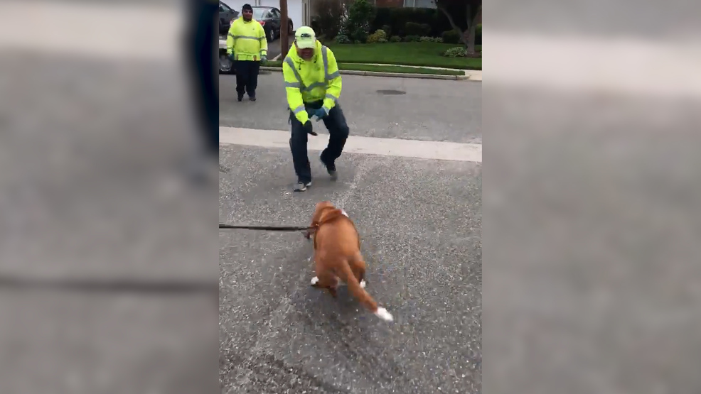 This Dog is Delighted to Greet His Sanitation Worker Buddies