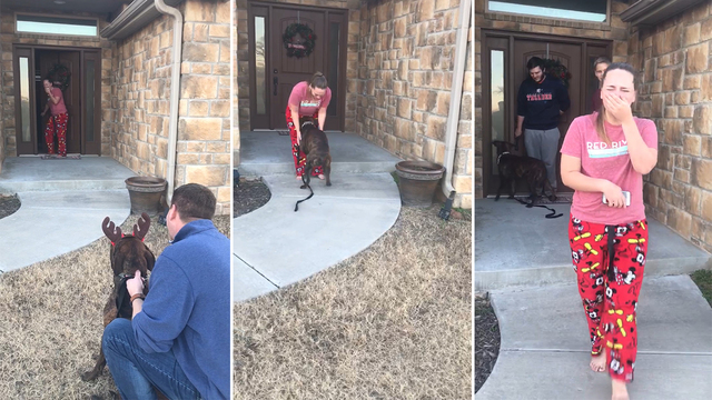 Girl Thought Shelter Dog She'd Been Caring For Was Adopted, Sees Him Outside