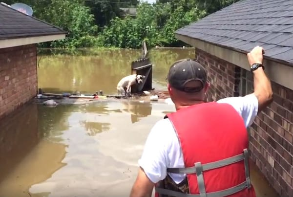 Dog Had Been Hanging On In The Water For 16 Hours When They Finally Found Him