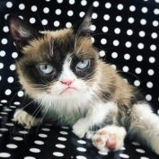 Grumpy Cat – the internet meme who made us smile died