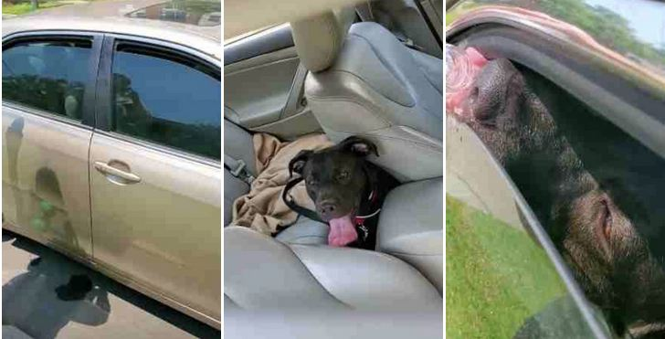 Veteran Sees Puppy In Hot Car And Breaks The Law To Save Him