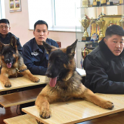 20 Good Dogs Who Have Jobs And Work For A Living