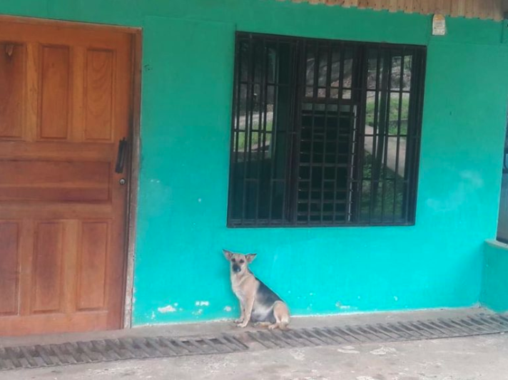 Pregnant Dog Waits By The Door For Her Family To Return, But They Moved Away