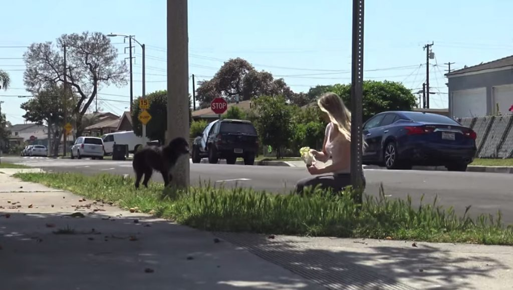 Rescuers Follow Scared Stray, And She Keeps Going Back To The Same Spot