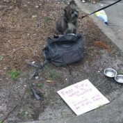Dog Abandoned Along With Sad Note, But It Wasn't His Owner Who Dumped Him