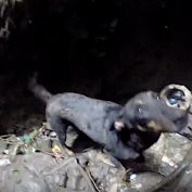 Dog Weeps At The Sight Of Her Rescuer Coming To Save Her