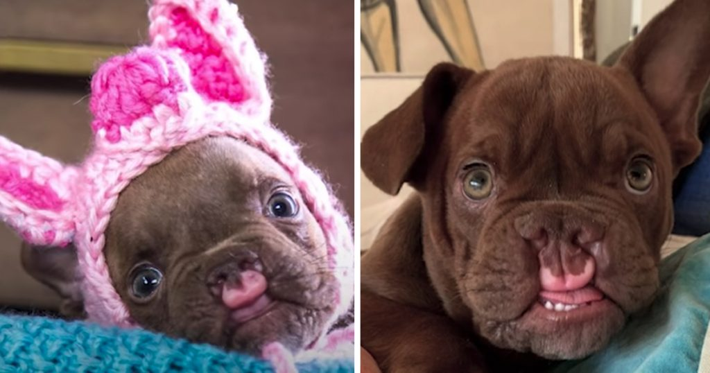 Odd-Looking Puppy Abandoned By Breeder Wonders If He Could Ever Be Loved