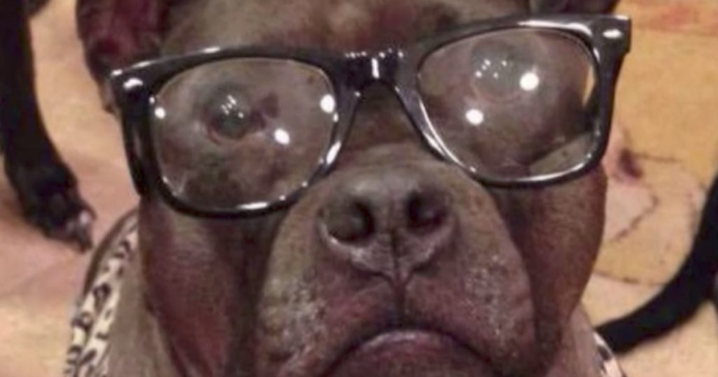 Family Wants To Help Their Nearly Blind Dog, And Vet's Suggestion Prolongs His Life