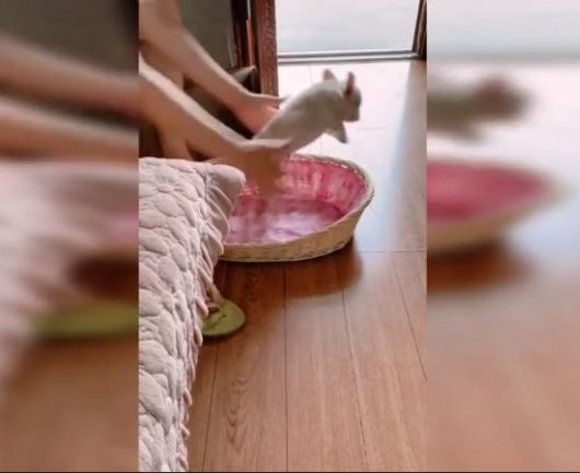 Chinese woman catches French bulldog attempting to jump out of basket