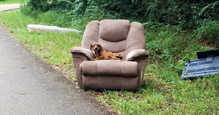 Dog Abandoned On The Road In A Chair Was Too Scared To Go Look For Food