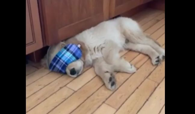 Pampered puppy gets some much needed beauty rest