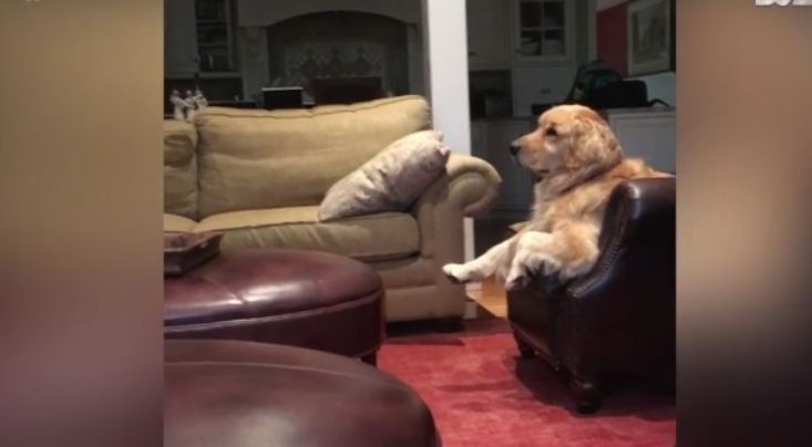 Rescue dog loves watching tv while sitting on couch