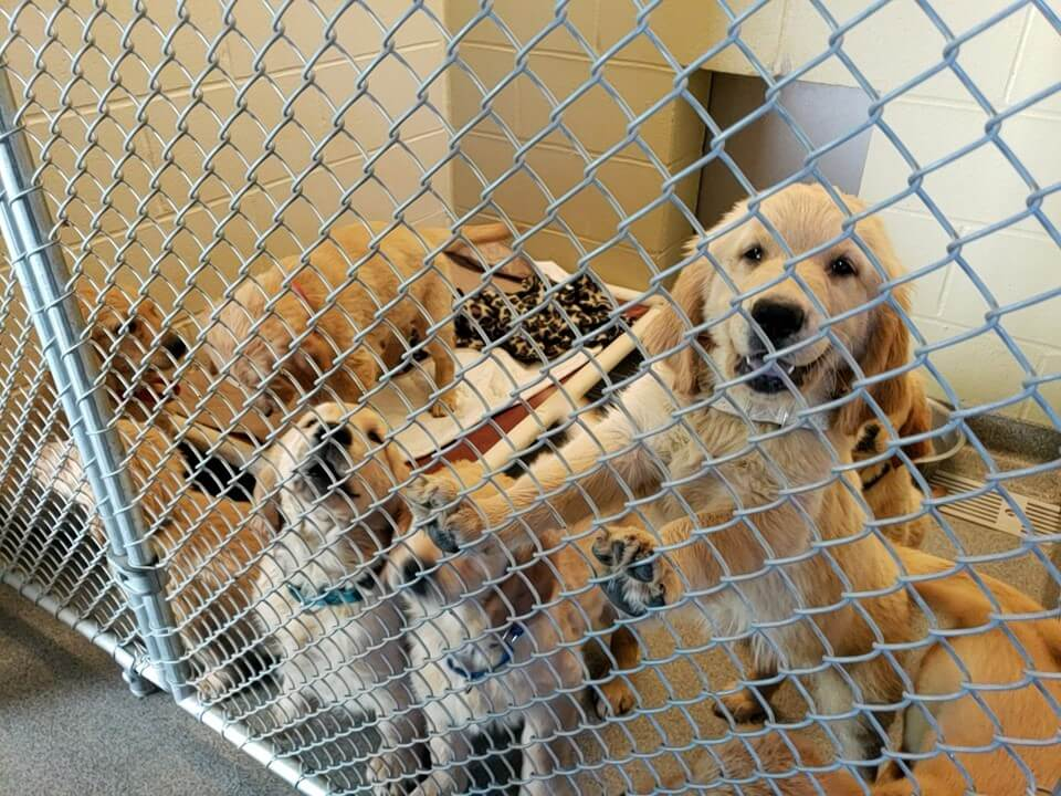 Over 100 dogs and puppies seized from 'squalid' conditions at kennel