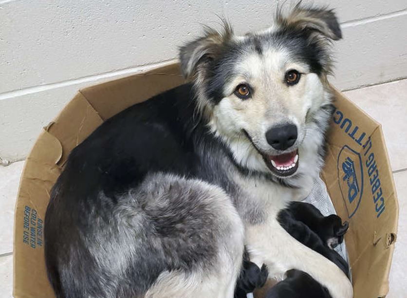 Dog Found Abandoned And Sealed In A Box Along With Her 9 Puppies