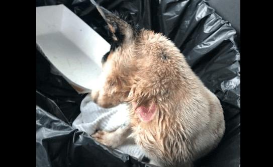 Injured puppy found in dumpster near restaurant