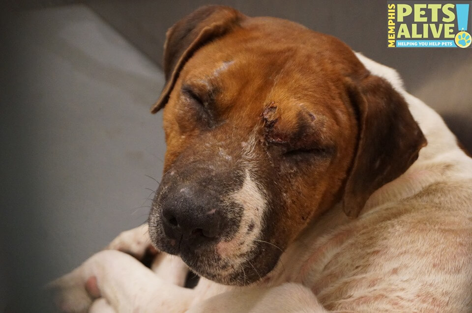 Injured stray waits for someone to want him