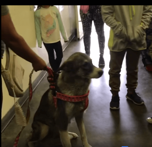 Momma dog's nightmare: Dumped at shelter with her 8 puppies