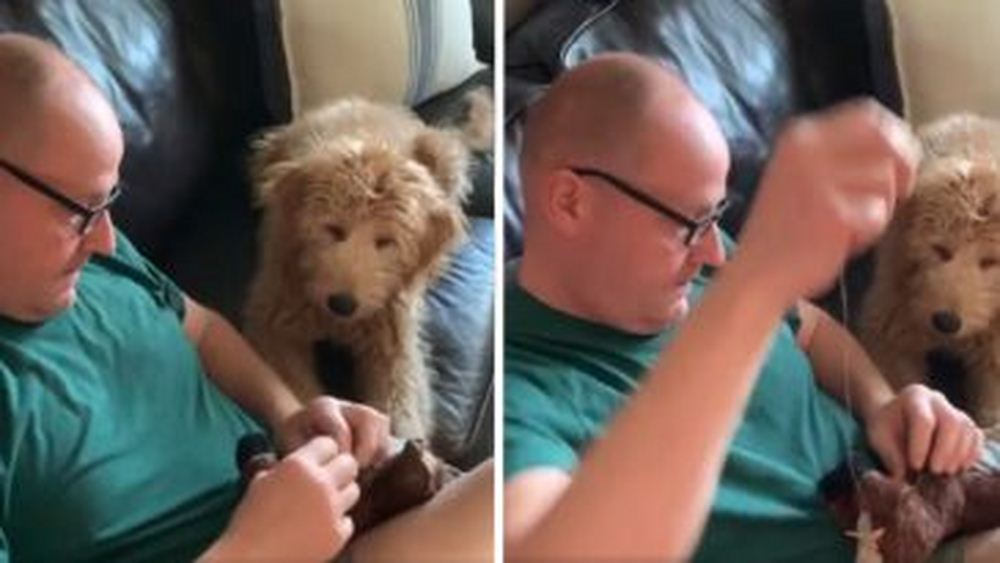 Nervous Dog Watches Intently As Dad Tries To Save Stuffed Toy's Life