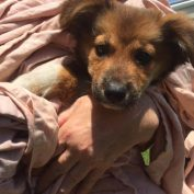 Seriously injured 3-month-old puppy dumped on side of road