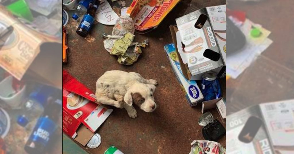 Man Goes To Throw Trash Away, Finds Tiny Puppy At The Bottom Of The Dumpster