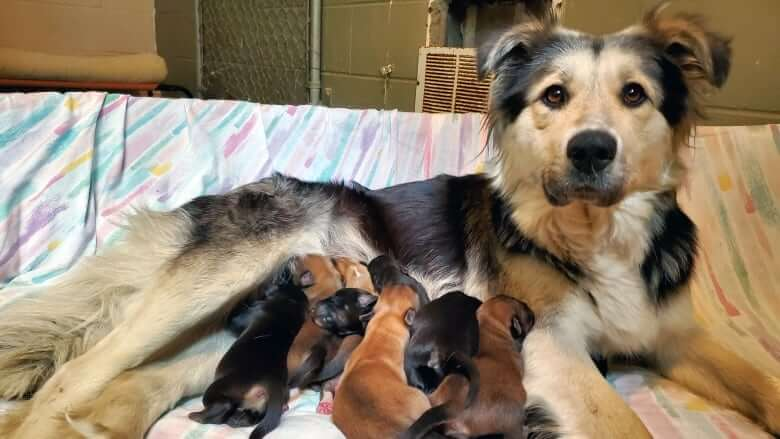 Mother dog and her 9 puppies left in sealed box at landfill