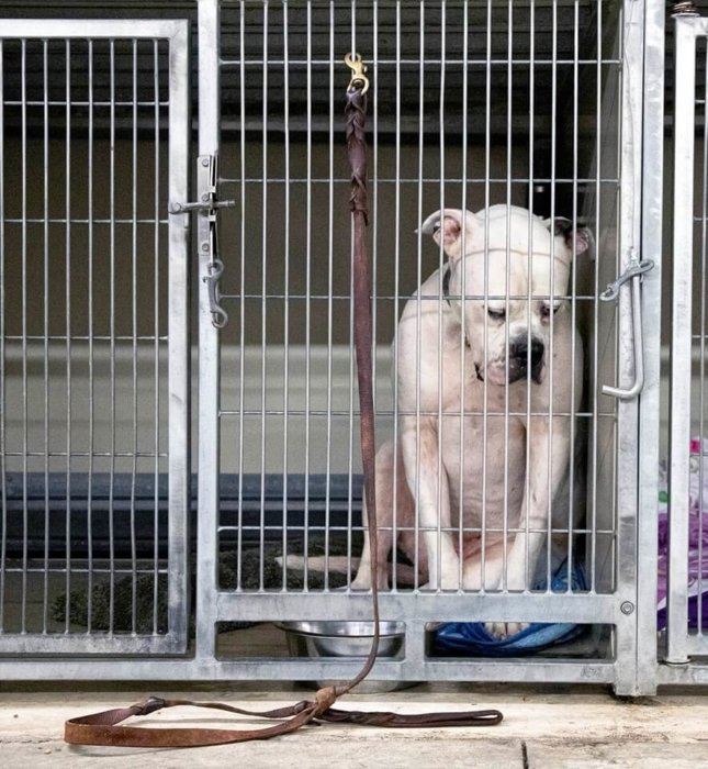 Lost soul Ritter feels heartbreak and hopelessness at shelter