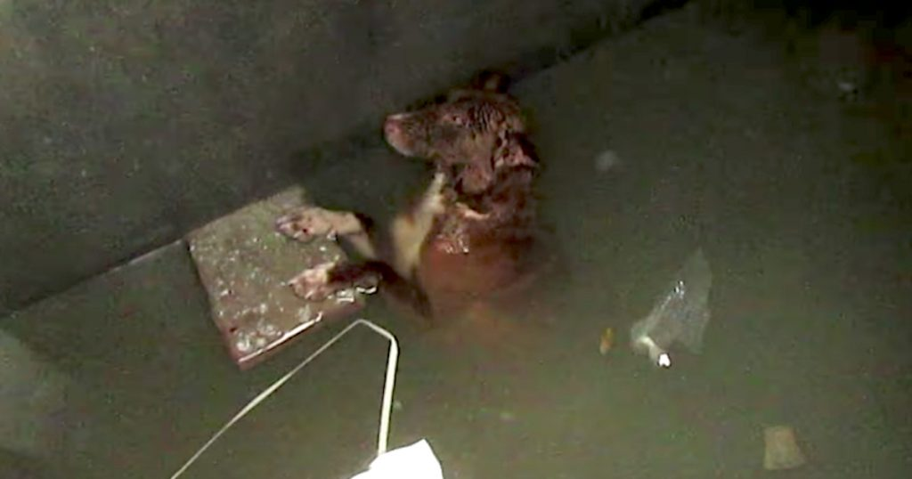 Dog Had Been Trapped In A Tank All Night, But They Refused To Let Him Die