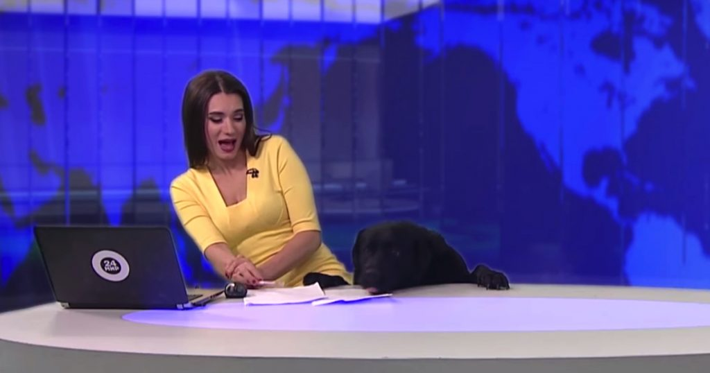 Dog Sneaks Onto News Set For His 15 Minutes Of Fame