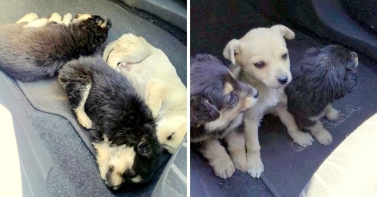 Owner Doesn't Want Pups And Abandons Them On Busy Street To Become Roadkill