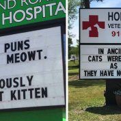 16 Cat Signs From Vets With Great Senses Of Humor