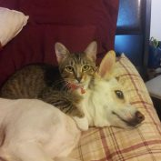 14 Cats Whose Favorite Beds Are Actually Dogs