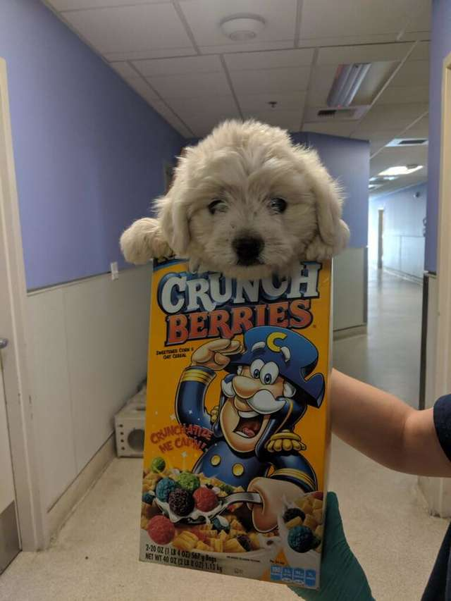 Someone Dropped A Dog Off At The Shelter In A Cereal Box For A Carrier