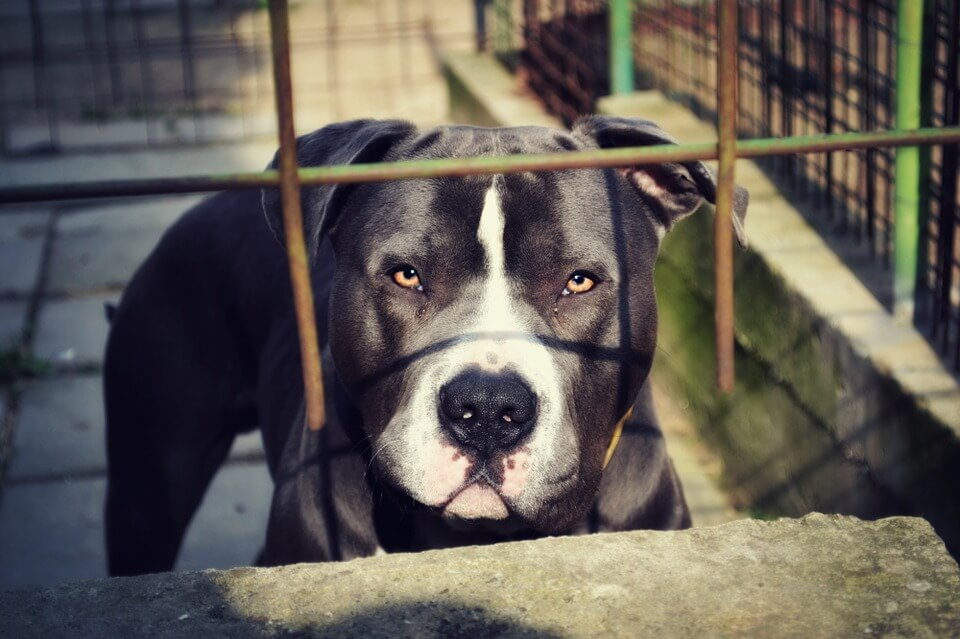 Man sentenced to large fine and prison in dog fighting case