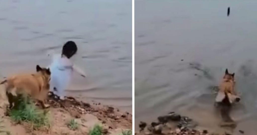 Dog Saves Girl Trying To Retrieve Ball, Goes Into Water To Get It Himself