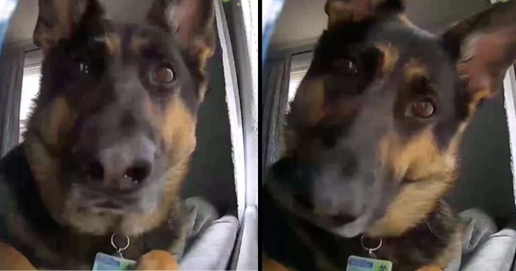 Home Security Footage Picks Up Hilarious Footage Of Guard Dog