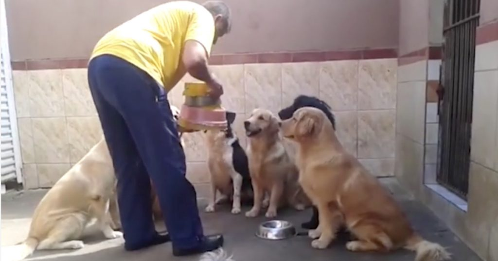 Dogs Show Off Table Manners As Dad Hands Out Their Food Bowls