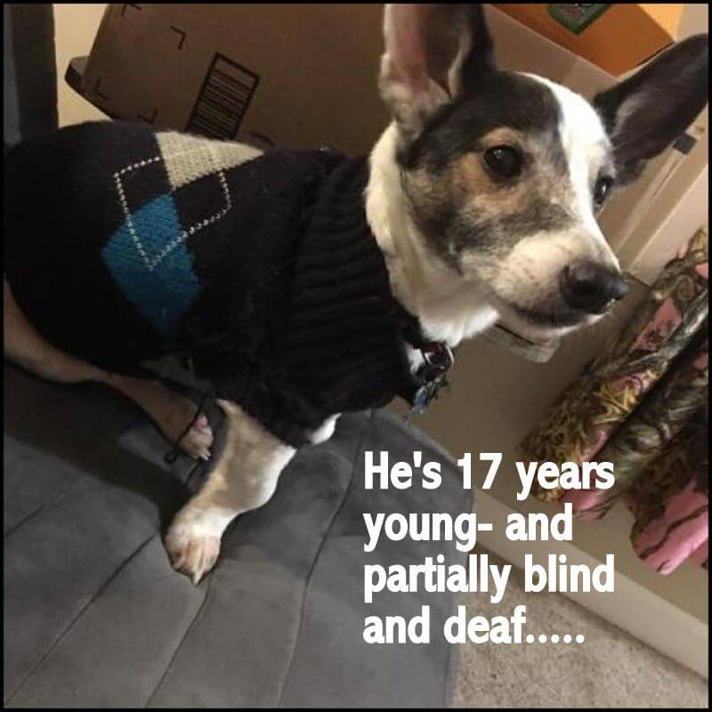 Miracle needed for 17-year-old dog that needs to be rehomed