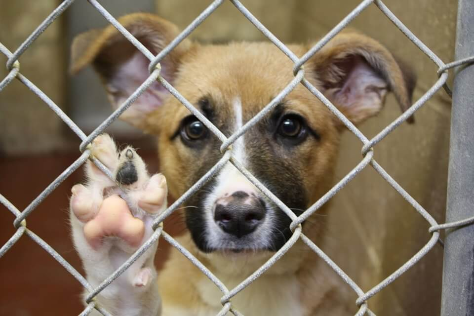 Fire station goes to the dogs during county animal shelter closure