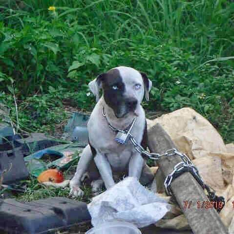 Neglected and discarded, dumped pup left out in Florida heat