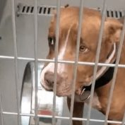 'Red dot' listing at shelter: Pup carries his bowl and ready to go home