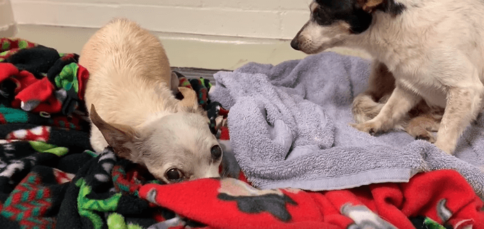 Two Chi seniors 'seized' after their owner was found deceased